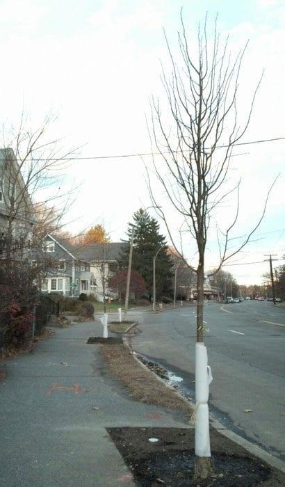 Washington Street in West Newton may look greener next year