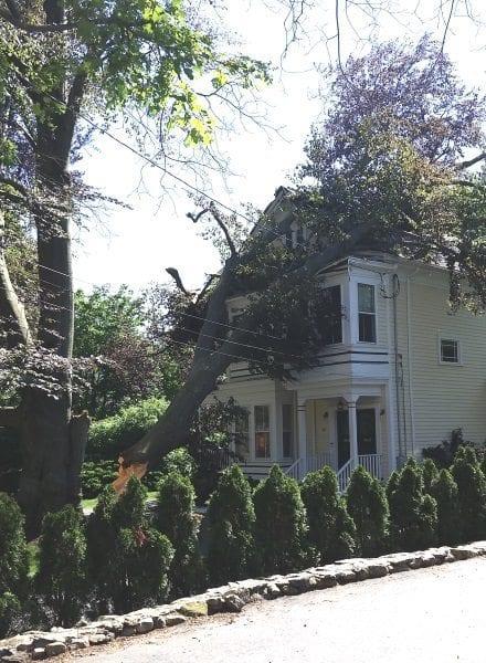 Nearly 200 year-old-tree hits house on Oak Street
