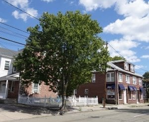 "14"" DBH red maple to be removed at 208 Adams Street. (Photo by Julia Malakie)"