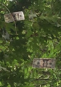 Turns out maybe money does grow on trees