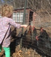 Chickens go missing from Newton Community Farm
