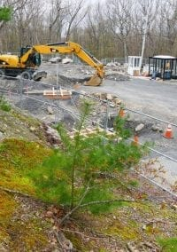Newton Conservators: BC's new salt shed threatens Webster Woods