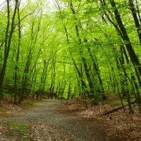 Mayor to brief CPC on Webster Woods tonight