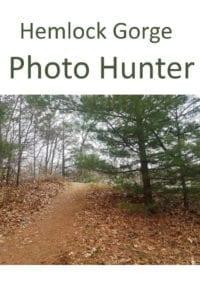 Photo hunting in Hemlock Gorge